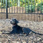 Lola's Fall Dog Treats